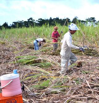 熱中症対策で畑の真ん中に水かんを準備する農家=4日午前、西表東部