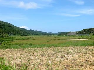 県内最大の水田地帯といわれる満田原地区。水不足により今期は植え付けがなかった=19日、久部良の県道与那国島線沿い