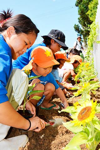 ヒマワリの苗を植える八重山農林高校の3年生とあいの保育園の園児ら=29日午前、同園