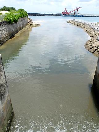 生活雑排水などで水質が悪化している田原川。河口から祖納港へ流れ出ている=6月18日午前