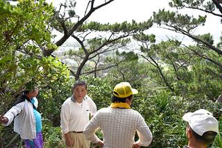 フスコウス山の頂上付近で現地調査を行う川平村の観光を考える会の会員ら。松林の向こう側に見えるのは川平集落=12日午前、同山
