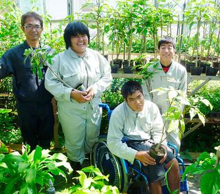 八重山特別支援学校の子どもたちが育てたツマベニチョウの食草、ギョボク(同校提供)