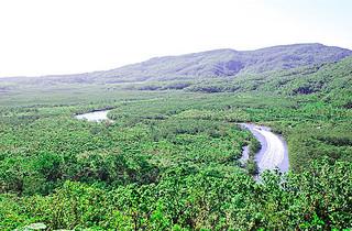 森林生態系保護地域が拡大される西表島(資料写真)