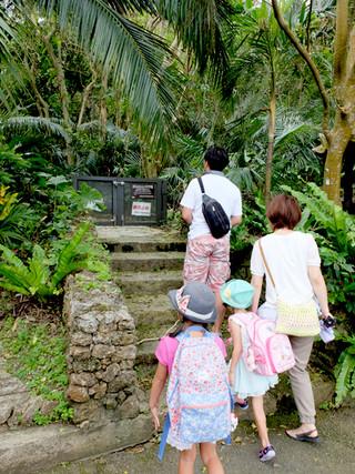 通行止めになっていることを知らずに、ヤエヤマヤシ群落を訪れる観光客=29日午前、ヤエヤマヤシ群落入り口