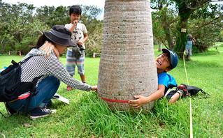 母親と一緒に木の太さを測ろうと必死に手を伸ばす男の子=30日午前、バンナ公園Cゾーン