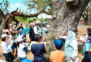 宮良浜川原のヤラブ並木で巨木の直径を測る様子を観察する子どもたち=5日午前