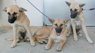 八重山保健所に収容されている子犬(同保健所提供)