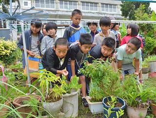 島の植物を見学する石垣小学校の4年生ら=石垣市石垣の亀川功さん宅の家庭菜園