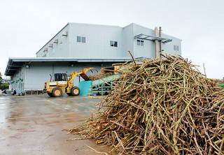手刈りで収穫され、搬入されたサトウキビ。次々と処理されていく=11日午後、JAおきなわ小浜製糖工場