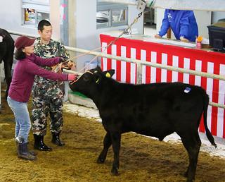 牛のセリを体験する滋賀県立八日市南高校の生徒(中央)=14日午前、同市場