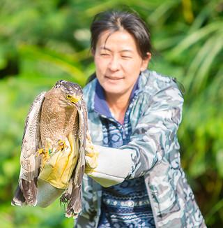 放鳥されるカンムリワシの「ふぁなん」=18日午前、石垣市星野のフアナン橋近くの牧草地