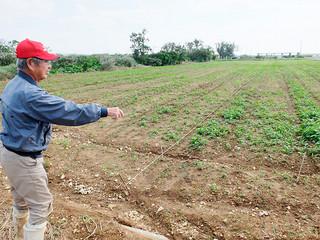 「早植えの準備はしたが、長雨でトラクターが入れられない」と嘆く兼浜秀雄さん=18日午後、白保近くの赤嶺原