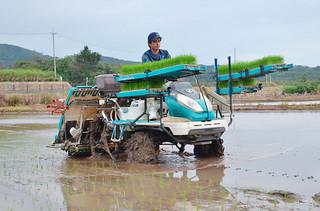 日本一早い「超早場米」の田植えをスタートさせた西大舛高均さん=20日午前、西表島大富