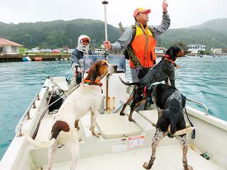 犬を伴い、内離島に向かう県猟友会竹富町地区のメンバー=1月30日、白浜港