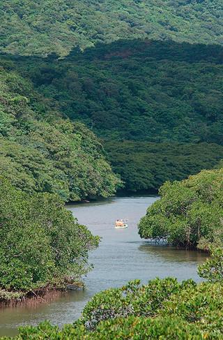 世界自然遺産登録に向けた作業が進んでいる西表島=2010年、西表東部の後良川