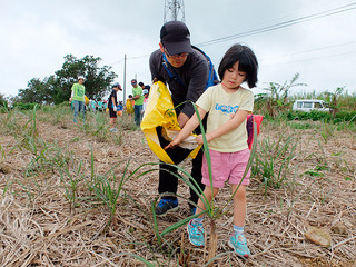 株出しの補植作業には約70人が参加。補植後に堆肥をまく=5日午前、崎枝地区のサトウキビ畑