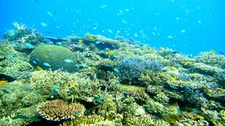 ベストダイビング国内エリアで16年連続1位に輝いた石垣島の海(名蔵湾)=八重山ダイビング協会提供