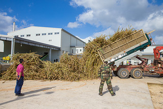 原料処理量の合計が2万2301㌧で操業を終えた竹富町内の3製糖工場。台風や長雨などが影響し全体的に低単収、低糖度だった=15年12月8日午後、西表糖業