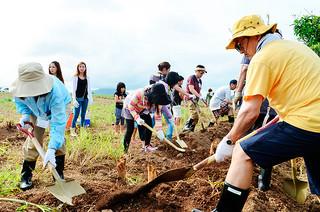 白保与那岡(ユナムリ)のサトウキビ畑の周りで糸芭蕉の植え付けを行う参加者ら=14日午後、白保与那岡(ユナムリ)