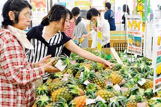 パイナップルコーナーでハワイ種のパインを手に取る買い物客=15日午前、JAファーマーズマーケットやえやまゆらてぃく市場