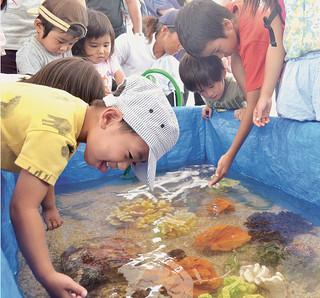 みなとまつりでナマコやヒトデなど海の生き物に触れ合う子どもたち=18日午前、旧離島桟橋