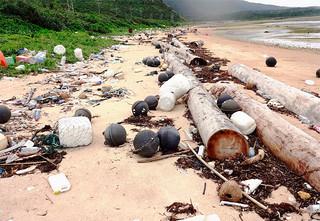 沈没した木材運搬船から流出したラワン材。西表島野原海岸には27本の漂着が確認されている=4月7日(山口晴幸氏提供)