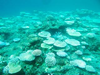 石垣島と黒島の中間地点のサンゴ。白化が進行している=8月21日、(環境省那覇自然環境事務所提供)