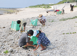 ウミガメ繁殖地等保全事業の一環で白保の海岸線を清掃する参加者たち=24日午前