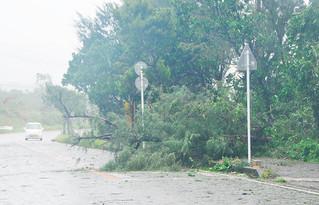 台風17号による強い風で倒れたと思われる樹木=27日午後、石垣市真栄里の大本小学校近く