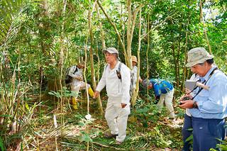 空港アクセス道路予定地周辺にあるヤエヤマシタンを確認し、ほかの保全種なども調査する松島昭司委員(中央)ら=24日午前