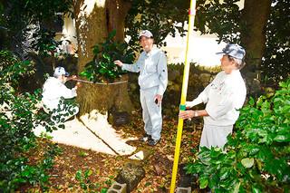 防災林として可能性を秘めるフクギの調査を島内で初めて行う琉球大学の仲間勇栄名誉教授(中央)=29日午後、市内白保の民家