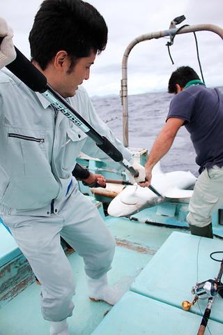 漁業者とともに一本釣りでヒットしたメジロザメを船上に引き上げる水産課職員=21日正午すぎ、石垣島白保沖合