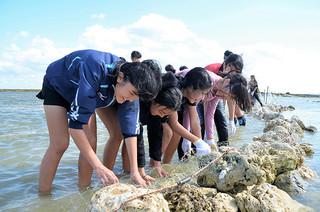 魚垣のなかに魚がいないかどうか確認する児童ら=17日午後、大浜まるべ海岸
