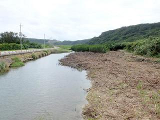 町が河川氾濫の原因の一つとして樹木やヒルギの一部を除去した田原川河口付近。一時中断を余儀なくされている=19日午後