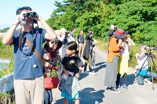 名蔵湾沿いの水田地帯でカンムリワシを観察する参加者ら=29日午前