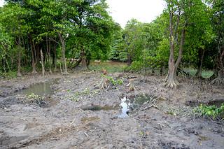 ヒルギが伐採された宮良川上流=17日午後