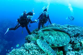 第17回「ダイブ&トラベル大賞2017」のベストダイビングエリア国内部門で、17年連続の1位となった石垣島の海(八重山ダイビング協会提供)