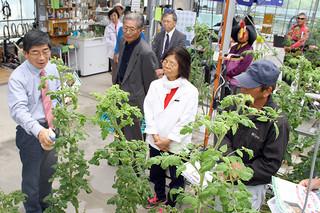 液状のキトサンをトマトにかけ実演を行う前田理事(左)=13日午後、House農園石垣島