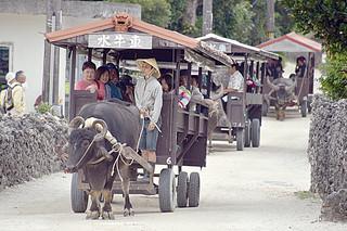 多くの観光客が訪れる竹富島で人気の水牛車観光。観光シーズンを迎え、受け入れを制限する声は根強い=3月22日午前、竹富島
