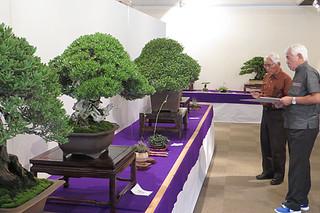 出展された盆栽を審査する新城審査委員長(左)と、本社の黒島社長=12日午後、市民会館展示ホール