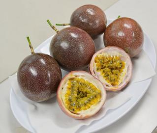 熱研が育成したパッションフルーツの新品種「サニーシャイン」=11日午前、熱研