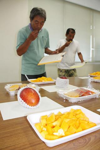 出品されたマンゴーを食べ比べする参加者ら=21日午後、県八重山合同庁舎