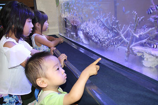 普段見ることのできないサンゴに見入る子どもたち=22日午後、石垣市総合体育館メインアリーナ