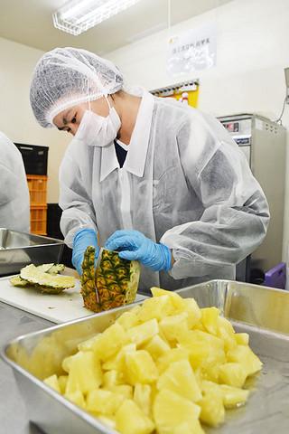 収穫された規格外パインをカットパインに加工する八商工の生徒=24日午後、同加工場