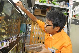 観賞用の魚にえさを与える小浜中の袴田颯介君=21日午前、メイクマン石垣店
