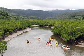 マングローブの原生林に覆われた後良川上流をカヌーで上り視察を行う調査団=18日午前、西表島