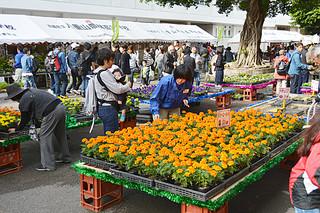 説明=草花の苗など多彩な農産物や加工品が販売されている八重農の創立80周年記念第36回農業祭=9日、同校