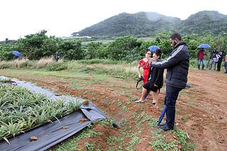 亜熱帯気候を生かした石垣島産パイナップルの生産現場を視察する太平洋島しょ国の若手公務員ら=26日午後、崎枝屋良部の㈲やえやまファームの崎枝農場