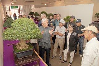 第33回八重山盆栽展が開幕。初日は作品の講評も行われた=12日午前、石垣市民会館展示ホール