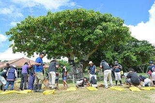 白保小学校グラウンドにある三本木のアコウ(後方)の樹勢回復に向けて、作業に励む同校PTAの会員と子どもたち=6月30日午前、同校